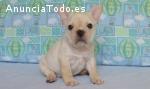 Preciosos cachorros Bulldog frances