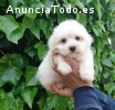 Regalo Bichon Maltes Mini Toy Para Adopc