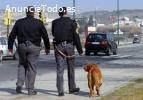 Se buscan vigilantes seguridad